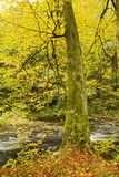 Fall foliage along river banks Stock Photo