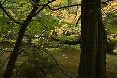 Fall foliage along river in forest Stock Photos