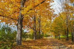 Fall foliage, autumn Stock Photos