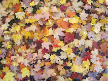 Fall foliage 3. Autumn leaves carpeting the ground Stock Photography