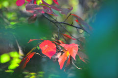 Free Fall Foliage Autumn Leaves Close Up Background Royalty Free Stock Photos - 99063058
