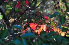 Fall Foliage Autumn Leaves Close Up Background stock photo