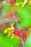 Fall Foliage Autumn Leaves Close Up Background royalty free stock photo