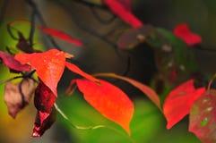 Fall Foliage Autumn Leaves Close Up Background stock image