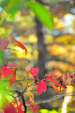 Fall Foliage Autumn Leaves Close Up Background Stock Photography