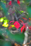 Fall Foliage Autumn Leaves Close Up Background Royalty Free Stock Photos