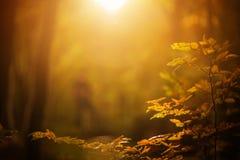 Fall Foliage Background royalty free stock image