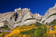 Fall Foliage in Banff Park Stock Images