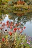 Fall Foliage Boise Idaho Albertson Park stock images