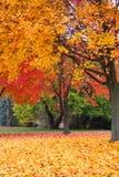 Fall foliage. Bright fall foliage in Michigan Royalty Free Stock Photo