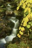 Fall foliage beside a cascading brook, White Mountains, New Hamp Stock Photo