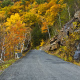 Catskill Fall Foliage Stock Image