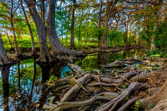 Fall Foliage on Cibolo Creek, Texas. Stepping Stones, Large Cypress Roots, and Fall Foliage on Cibolo Creek, Texas Stock Photography