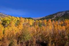 Fall foliage in Colorado stock photo