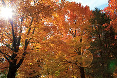 Fall foliage. The colorful canadian fall foliage Stock Image