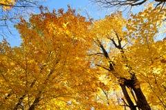 Fall foliage Stock Image