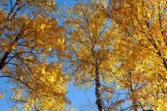 Fall foliage Royalty Free Stock Image