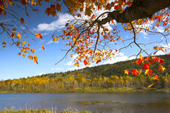 Fall foliage colors Stock Images