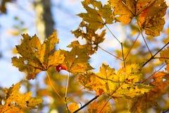 Fall foliage colors Stock Photos
