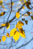 Fall foliage colors Royalty Free Stock Photography