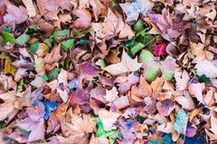 Fall Foliage Colors - Fallen Leaves along the Seine River near Paris, France. Fallen Leaves along the Seine River near Paris, France stock photography