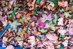 Fall Foliage Colors - Fallen Leaves along the Seine River near Paris, France. Fallen Autumn Leaves along the Seine River near Paris, France stock images