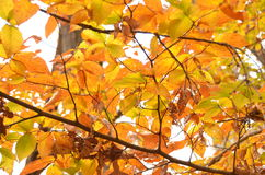 Fall foliage of colors Royalty Free Stock Photography