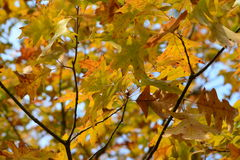 Fall foliage of colors Royalty Free Stock Photos