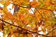 Fall foliage of colors Royalty Free Stock Images