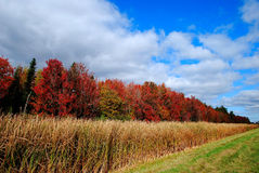 Fall foliage colours Royalty Free Stock Photography