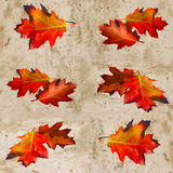 Fall foliage on the concrete background Royalty Free Stock Photography