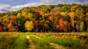Fall foliage and country road. Beautiful fall foliage on a rise behind a meadow with a country road Stock Photography