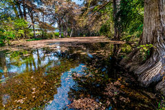 Fall foliage on the crystal clear Frio River in Texas. Royalty Free Stock Photos