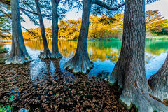 Fall foliage on the crystal clear Frio River in Texas. Fall Foliage from Trees Lining the Crystal Clear Frio River at Floating in the River at Garner State Park royalty free stock photography