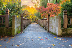 Fall Foliage at Crystal Springs Rhododendron Garden at sunset. Fall Colors along the bridge at Crystal Springs Rhododendron Garden in Portland Oregon at sunset Stock Photos