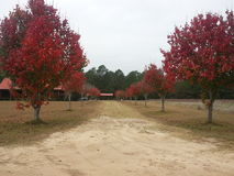 Fall Foliage in Driveway Royalty Free Stock Photography