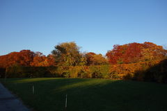 Fall Foliage At Dusk In The New York Botanical Garden Stock Images