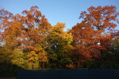 Fall Foliage At Dusk In The New York Botanical Garden Stock Image