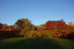 Fall Foliage At Dusk In The New York Botanical Garden Royalty Free Stock Image