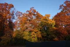 Fall Foliage At Dusk In The New York Botanical Garden Royalty Free Stock Photos