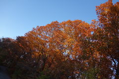 Fall Foliage At Dusk In The New York Botanical Garden Royalty Free Stock Photography
