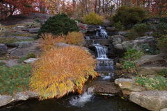 Fall Foliage At Dusk In The New York Botanical Garden Stock Photos