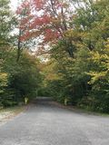 Empty road in autumn. Fall foliage, empty road bright red trees Royalty Free Stock Image