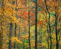 Fall Foliage, Tennessee Stock Photo