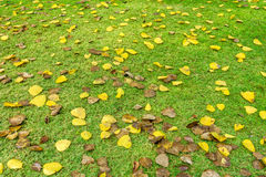 Fall foliage on green lawn Royalty Free Stock Images
