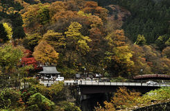 Fall Foliage of Japan Stock Photos