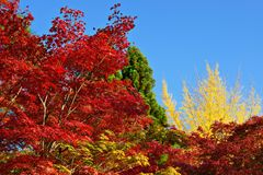 Fall Foliage in Kyoto Stock Photos