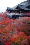 Fall foliage in kyoto Royalty Free Stock Photo