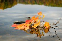 Fall foliage on lake Royalty Free Stock Images