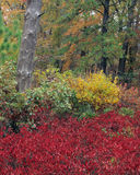 Fall Foliage Royalty Free Stock Images